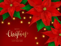 Free Poinsettia And Christmas Lights On Red Background Stock Photography - 164211612