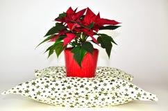 Poinsettia auf dem Kissen Lizenzfreie Stockfotografie
