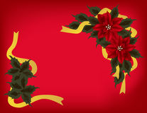 Poinsettia Background Stock Photos