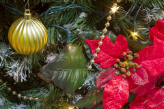 Poinsettia big red flower for christmas tree decoration Stock Image