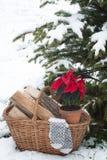 Poinsettia blüht im Topf im Korb mit Brennholz, Wollhandschuhe stockbilder