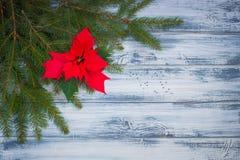Poinsettia blüht mit Weihnachten-Baumniederlassungen auf dem hölzernen Hintergrund Stockfotos