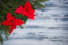 Poinsettia blüht mit Weihnachten-Baumniederlassungen auf dem hölzernen Hintergrund Stockbilder
