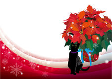 Poinsettia and blackcat Stock Image