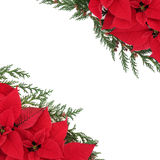 Poinsettia Bloemengrens Royalty-vrije Stock Afbeeldingen