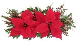 Poinsettia-Blumen-Anzeige Stockfotos