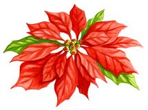 Poinsettia-Blumen-Aquarell Lizenzfreie Stockfotos