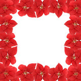 Poinsettia border Royalty Free Stock Photos