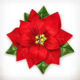 Poinsettia Christmas Star. Poinsettia, Christmas Star vector icon, isolated on white background Royalty Free Stock Image