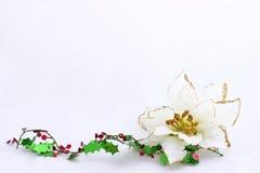 Poinsettia com o cartão de Natal do azevinho Imagem de Stock