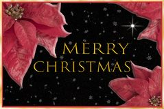Poinsettia on the corners Christmas card royalty free stock photography