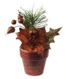 Poinsettia décorative Photographie stock