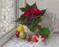 Poinsettia dans la fenêtre à la veille de l'avènement Image stock