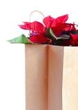 Poinsettia dans le sac de papier sur le fond blanc Photographie stock libre de droits