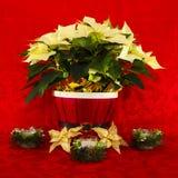 Poinsettia dans un panier rouge avec des bougies Image libre de droits