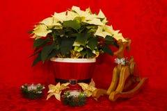 Poinsettia dans un panier rouge avec les bougies et le renne Photographie stock libre de droits