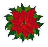 Poinsettia de fleur de Noël Photographie stock libre de droits
