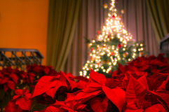Poinsettia with decorated christmas tree Royalty Free Stock Photos