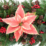 Poinsettia-Dekoration Stockbild