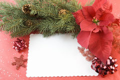Poinsettia fir branch Christmas card Stock Photography