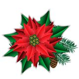 Poinsettia and fir branch with cone  on white. Royalty Free Stock Photos