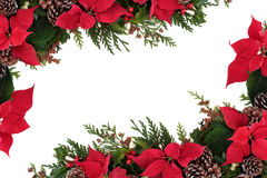 Poinsettia Floral Border. Christmas decorative border of poinsettia flower heads, holly, ivy, mistletoe and cedar leaf sprigs with pine cones over white stock photography