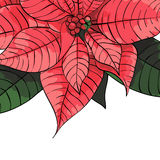 Poinsettia flower background for invitation  card Royalty Free Stock Photos