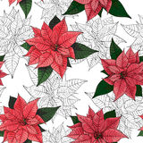 Poinsettia flower background for invitation  card Stock Photography