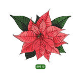 Poinsettia flower background for invitation  card Stock Image