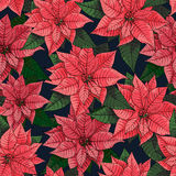 Poinsettia flower background for invitation  card Stock Images
