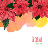 Poinsettia flower background for invitation  card Royalty Free Stock Image