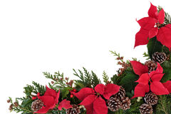 Poinsettia Flower Border. Christmas decorative border of poinsettia flower heads, holly, ivy, mistletoe and cedar leaf sprigs with pine cones over white royalty free stock photos