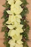 Poinsettia Flower Border Stock Photo