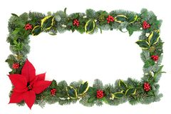Poinsettia Flower Border royalty free stock image