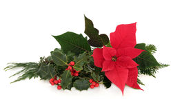 Poinsettia Flower Decoration. Christmas poinsettia flower table decoration with holly, ivy, spruce pine and cedar cypress leaf sprigs over white background Royalty Free Stock Photos