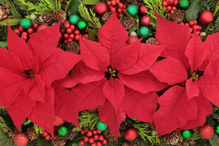Poinsettia Flower Display. Poinsettia flower background with bauble decorations, holly, mistletoe and winter greenery Stock Images