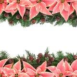 Poinsettia Flower Frame Stock Photo