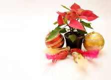Poinsettia flower and pigeons ornament Royalty Free Stock Photo