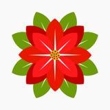 Poinsettia flower vector Stock Image