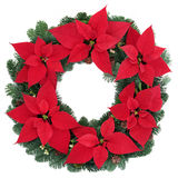 Poinsettia Flower Wreath Stock Photo