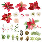 Poinsettia Flowers and Christmas Floral Elements - in Watercolor. Style - vector stock illustration