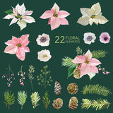 Poinsettia Flowers and Christmas Stock Photos