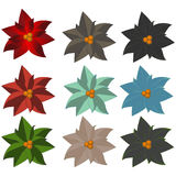 Poinsettia flowers in different shades. Christmas flowers Royalty Free Stock Photos