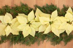 Poinsettia Flowers on Oak Stock Photo