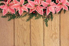 Poinsettia Flowers on Oak Stock Images