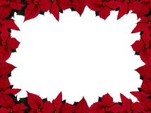 Poinsettia frame (rectangle). Picture of poinsettia frame, rectangle stock photo