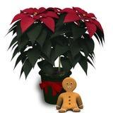 Poinsettia and Gingerbread. Stock Photos