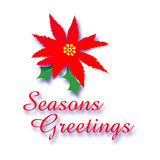 Poinsettia greetings. Seasons greetings sign red poinsettia and holly Stock Photo