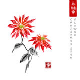 Poinsettia hand drawn with ink. Christmas star flower. Traditional oriental ink painting sumi-e, u-sin, go-hua. Poinsettia hand drawn with ink. Christmas star Royalty Free Stock Photo