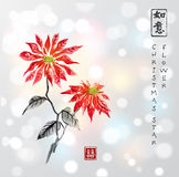 Poinsettia hand drawn with ink on white glowing background. Christmas star flower. Traditional oriental ink painting Royalty Free Stock Photo